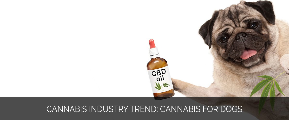 Cannabis Industry Trend- Cannabis for Dogs - Marijuana Marketing Xperts