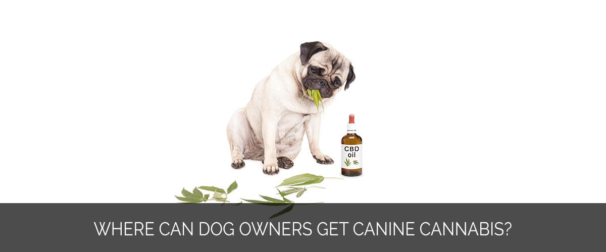 Where can dog owners get canine cannabis - Marijuana Marketing Xperts