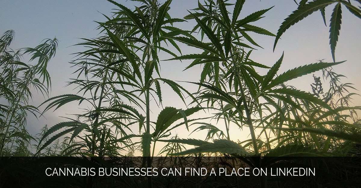 Cannabis Businesses Can Find a Place on LinkedIn - MMX